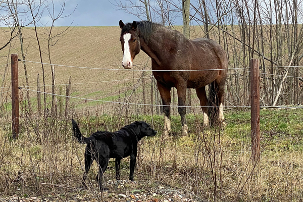 Juni gillar inte hästar speciellt, men Max är ok verkar det som